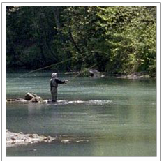 Fly Fishing in Stream